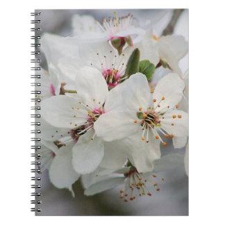 Cherry Sakura Blossom Notebooks