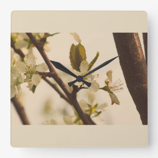 Cherry tree blossoms square wall clock
