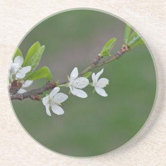 Cherry tree flowers coasters