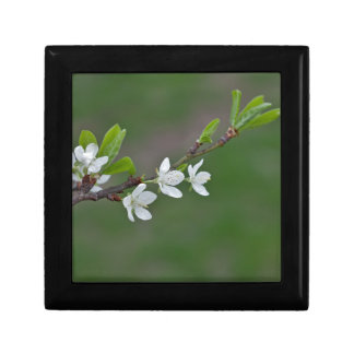 Cherry tree flowers gift box