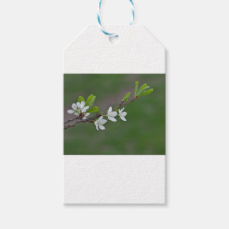 Cherry tree flowers gift tags