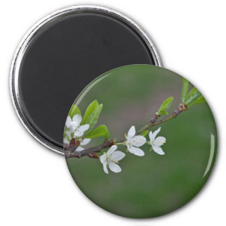 Cherry tree flowers magnet