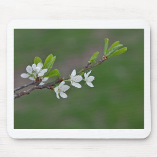 Cherry tree flowers mouse pad