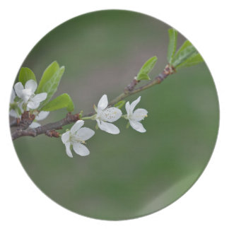 Cherry tree flowers party plate