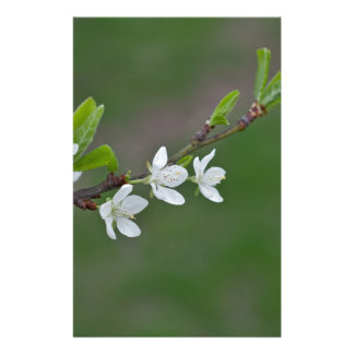 Cherry tree flowers stationery