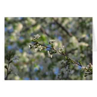 Cherry Tree in Spring Blank Card  #2  02
