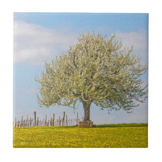 Cherry Tree In Spring Tile