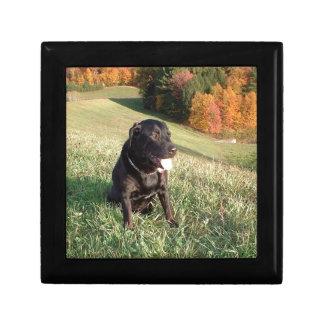 Chert Dog Gift Box