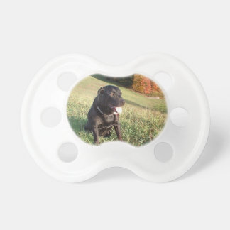 Chert Dog Pacifier