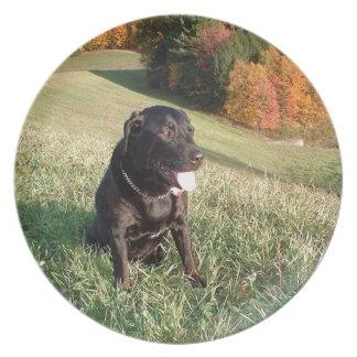 Chert Dog Plate