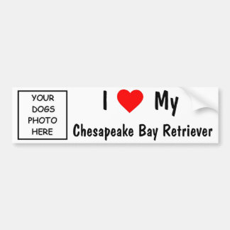 Chesapeake Bay Retriever Bumper Sticker