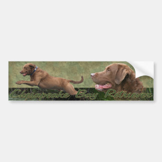 Chesapeake Bay Retriever bumpersticker Bumper Sticker