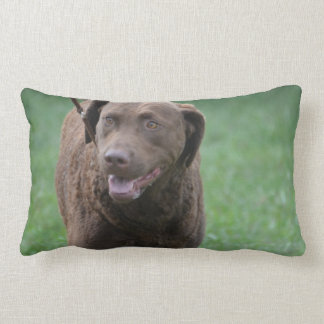Chesapeake Bay Retriever Lumbar Pillow