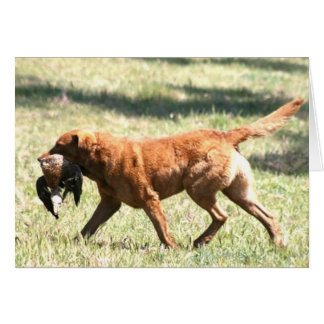 chesapeake bay retriever retrieving.png card