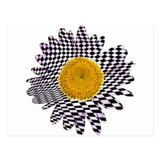 Chess board daisy postcard