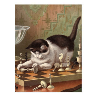 Chess Cat postcard
