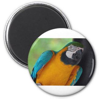 Chester 2 Inch Round Magnet