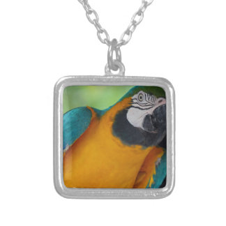 Chester Silver Plated Necklace