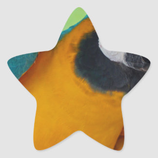 Chester Star Sticker