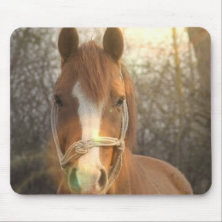 Chestnut Arab Horse Mouse Pad