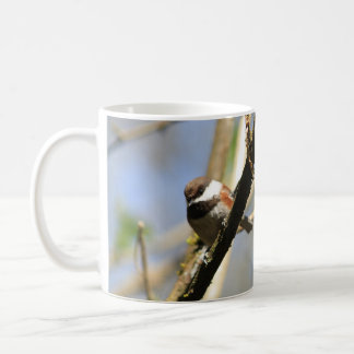 Chestnut Backed Chickadee Coffee Mug