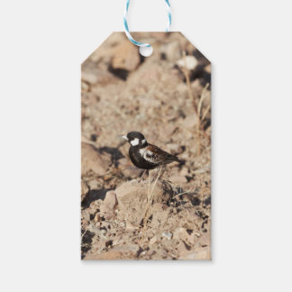 Chestnut backed sparrowlark (Eremopterix leucotis) Gift Tags