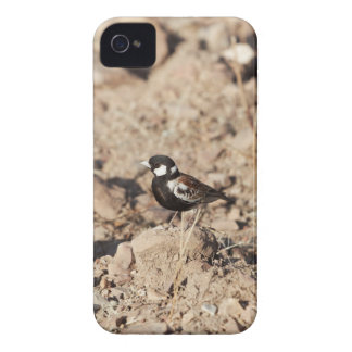 Chestnut backed sparrowlark (Eremopterix leucotis) iPhone 4 Case-Mate Case