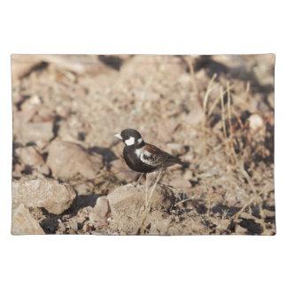 Chestnut backed sparrowlark (Eremopterix leucotis) Placemat