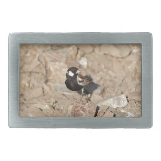 Chestnut backed sparrowlark (Eremopterix leucotis) Rectangular Belt Buckles