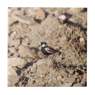 Chestnut backed sparrowlark (Eremopterix leucotis) Tile