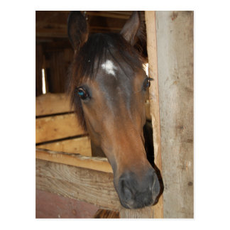 Chestnut Barn Horse Fun Postcard