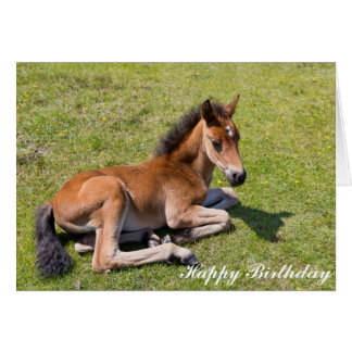 Chestnut foal baby horse - Birthday Card