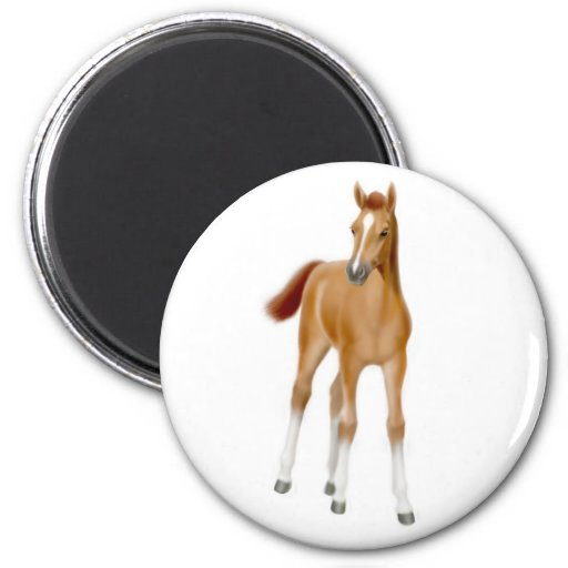 Chestnut Foal Magnet