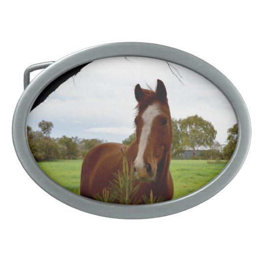 Chestnut Horse Sniffing A Banksia Tree, Oval Belt Buckles