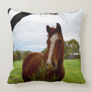 Chestnut Horse Sniffing A Banksia Tree, Throw Pillow