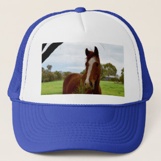 Chestnut Horse Sniffing A Banksia Tree, Trucker Hat