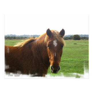 Chestnut Horse with a Blaze Postcard