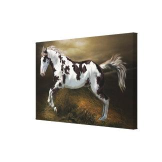 Chestnut Splash Frame Tovero Paint Horse Canvas Print