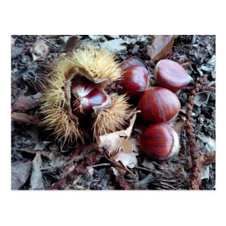 Chestnuts card postcard