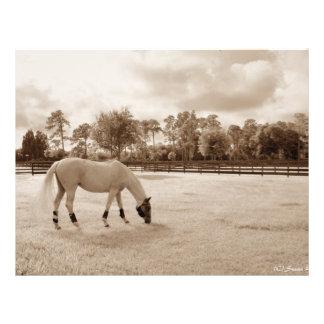 cheval blanc dans le pâturage frôlant la sépia prospectus avec motif