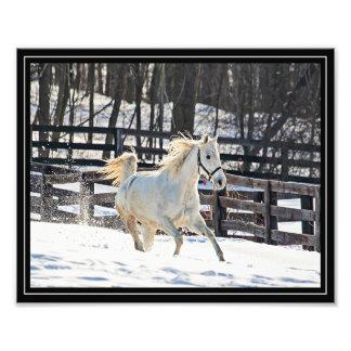 Cheval blanc galopant photographie