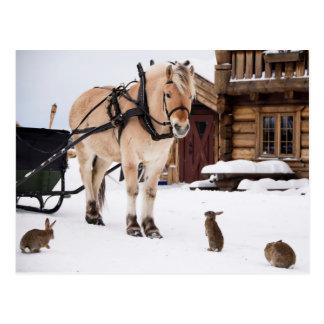Cheval et lapins d'entretien d'animal de ferme carte postale