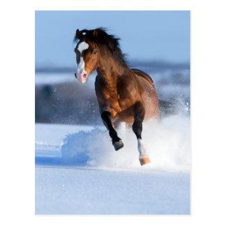 Cheval fonctionnant à travers le champ en hiver cartes postales