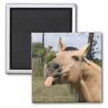 cheval razzberry magnets pour réfrigérateur