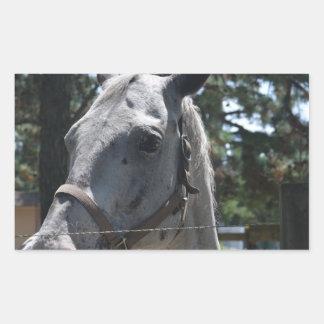 cheval repéré par blanc sticker en rectangle