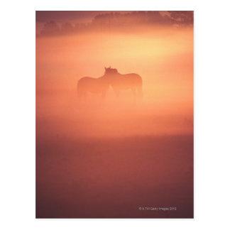 chevaux en rosée carte postale