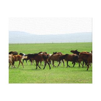 Chevaux sur le pâturage - photographie de paysage toiles tendues sur châssis