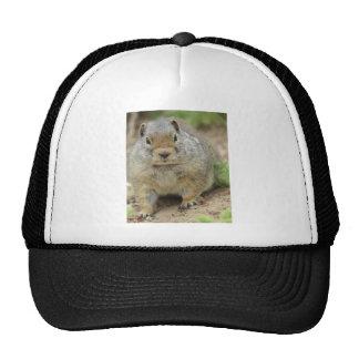 Cheville ouvrière casquettes