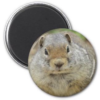 Cheville ouvrière magnet rond 8 cm