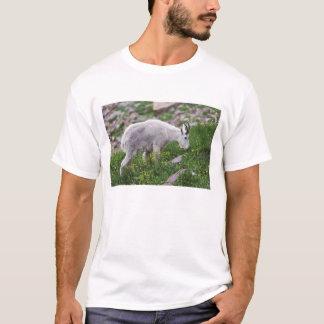 Chèvre de montagne, Oreamnos américanus, adulte T-shirt
